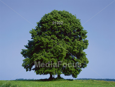 nature outdoors trees Stock Photo