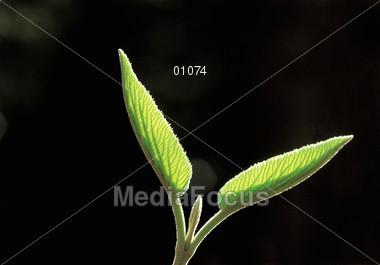 palm spiritual summer Stock Photo