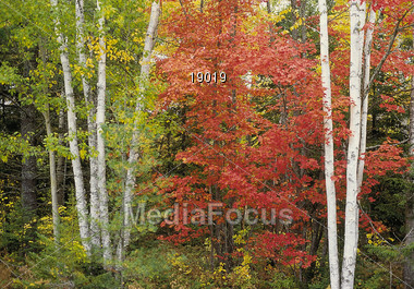 autumn fall trees Stock Photo
