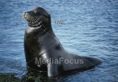 seals sealions wild Stock Photo