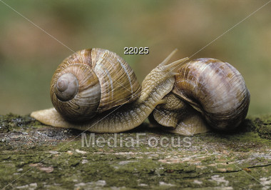 animals shells snail Stock Photo
