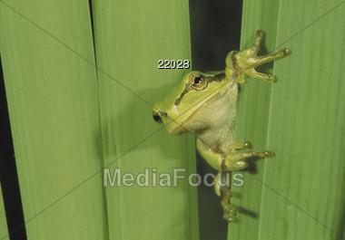 animals tree frog Stock Photo