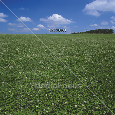 countryside field nature Stock Photo