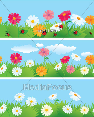 3 Seamless Borders With Ox-eye Daisy Flowers And Ladybirds Stock Photo