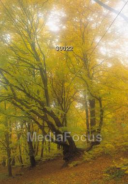 hills autumn fall Stock Photo