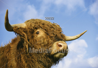 buffalo bisons wild Stock Photo