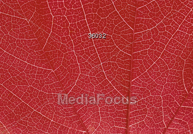red leafs nature Stock Photo