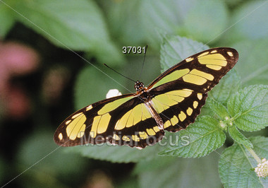 butterfly wings bug Stock Photo