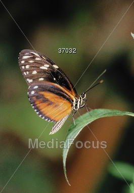 butterfly orange bugs Stock Photo