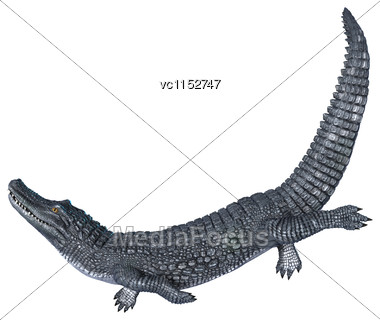 3D Digital Render Of An Alligator Caiman Isolated On White Background Stock Photo
