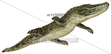 3D Digital Render Of An American Alligator Isolated On White Background Stock Photo