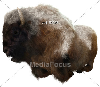 3D Digital Render Of An American Bison Resting Isolated On White Background Stock Photo