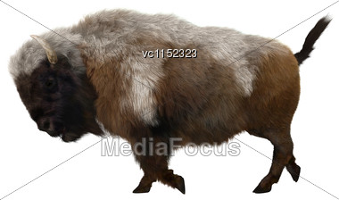 3D Digital Render Of An American Bison Walking Isolated On White Background Stock Photo