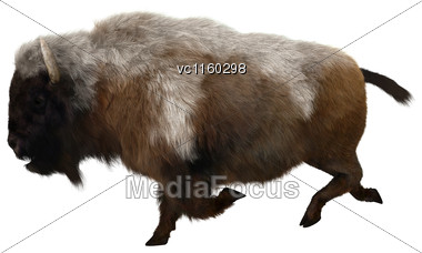 3D Digital Render Of An American Bison Isolated On White Background Stock Photo