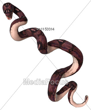 3D Digital Render Of An Anaconda Snake Isolated On White Background Stock Photo