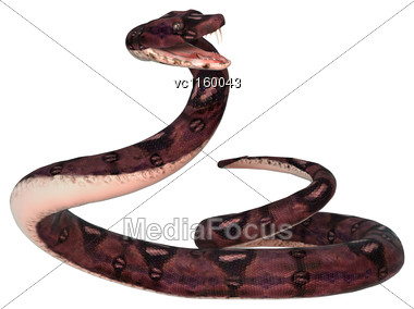 3D Digital Render Of An Anaconda Snake Isolated On White Background Stock Photo