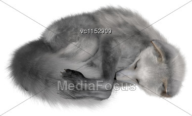3D Digital Render Of An Arctic Fox Sleeping Isolated On White Background Stock Photo