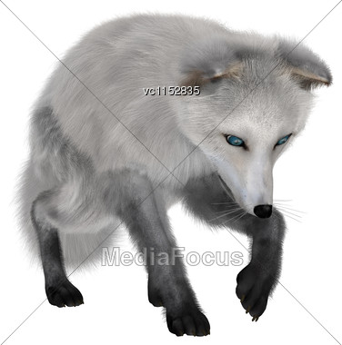 3D Digital Render Of An Arctic Fox Isolated On White Background Stock Photo