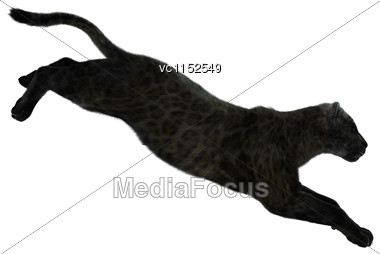 3D Digital Render Of A Big Cat Black Panther Isolated On White Background Stock Photo