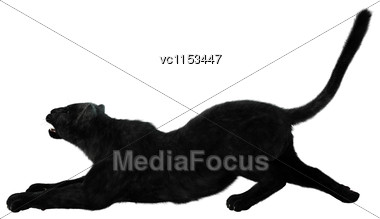 3D Digital Render Of A Big Cat Black Panther Stretching Isolated On White Background Stock Photo