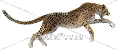 3D Digital Render Of A Big Cat Cheetah Hunting Isolated On White Background Stock Photo
