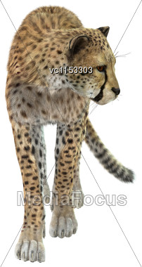 3D Digital Render Of A Big Cat Cheetah Isolated On White Background Stock Photo