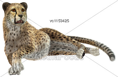 3D Digital Render Of A Big Cat Cheetah Resting Isolated On White Background Stock Photo