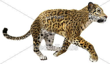 3D Digital Render Of A Big Cat Jaguar Running Isolated On White Background Stock Photo