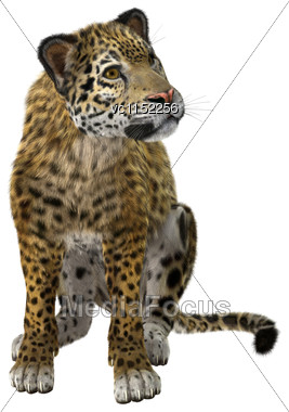 3D Digital Render Of A Big Cat Jaguar Isolated On White Background Stock Photo