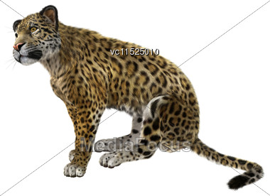 3D Digital Render Of A Big Cat Jaguar Sitting Isolated On White Background Stock Photo