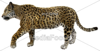 3D Digital Render Of A Big Cat Jaguar Walking Isolated On White Background Stock Photo