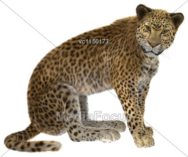 3D Digital Render Of A Big Cat Leopard Or Panthera Pardus Isolated On White Background Stock Photo