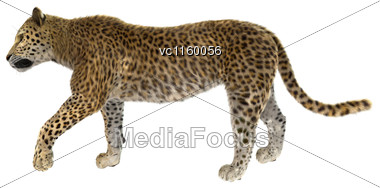3D Digital Render Of A Big Cat Leopard Isolated On White Background Stock Photo