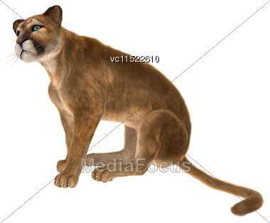 3D Digital Render Of A Big Cat Puma Sitting Isolated On White Background Stock Photo