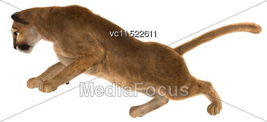 3D Digital Render Of A Big Cat Puma Climbing Isolated On White Background Stock Photo