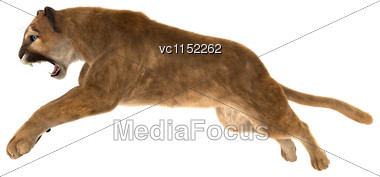 3D Digital Render Of A Big Cat Puma Jumping Isolated On White Background Stock Photo