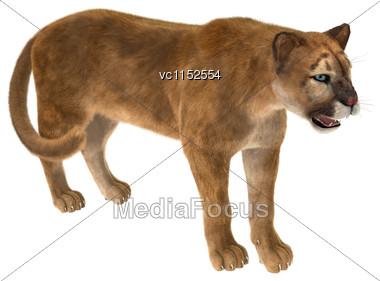 3D Digital Render Of A Big Cat Puma Iisolated On White Background Stock Photo