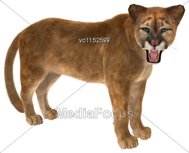 3D Digital Render Of A Big Cat Puma Isolated On White Background Stock Photo