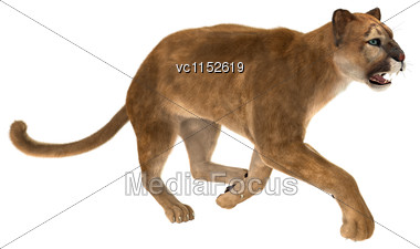 3D Digital Render Of A Big Cat Puma Running Iisolated On White Background Stock Photo
