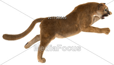 3D Digital Render Of A Big Cat Puma Hunting Isolated On White Background Stock Photo