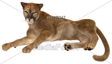 3D Digital Render Of A Big Cat Puma Resting Isolated On White Background Stock Photo