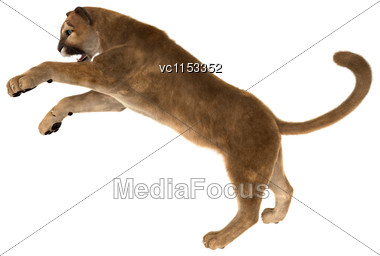 3D Digital Render Of A Big Cat Puma Fighting Isolated On White Background Stock Photo