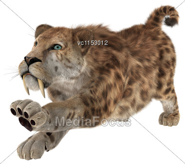 3D Digital Render Of A Big Cat Sabertooth Stretching Isolated On White Background Stock Photo
