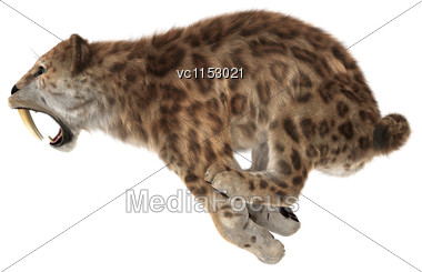 3D Digital Render Of A Big Cat Sabertooth Jumping Isolated On White Background Stock Photo