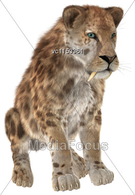 3D Digital Render Of A Big Cat Sabertooth Sitting Isolated On White Background Stock Photo
