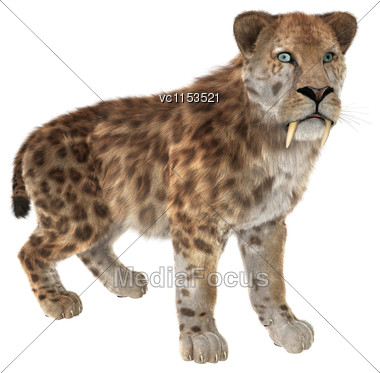 3D Digital Render Of A Big Cat Sabertooth Isolated On White Background Stock Photo