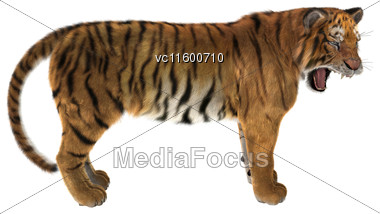 3D Digital Render Of A Big Cat Tiger Isolated On White Background Stock Photo
