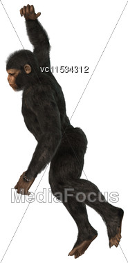 3D Digital Render Of A Big Chimpanzee Monkey Isolated On White Background Stock Photo