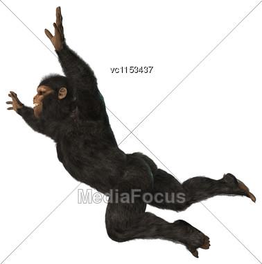 3D Digital Render Of A Big Chimpanzee Monkey Isolated On White Background Stock Photo