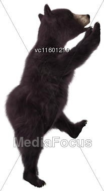 3D Digital Render Of A Black Bear Cub Climbing Isolated On White Background Stock Photo